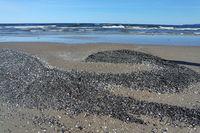 Strand mit vielen Muscheln