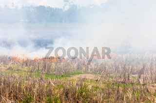 Costa Rica, fire in the field after harvest