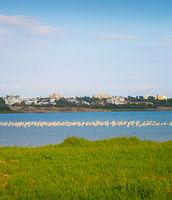 Flamingo lake Larnaca Cyprus flock