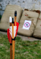 wooden arrow fether bull