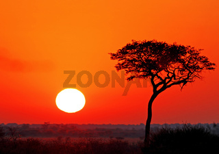Sonnenaufgang in der Zentralkalahari, Sunday Pan, Botswana; sunrise at central kalahari game reserve, Botsuana