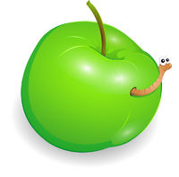 Wormy apple