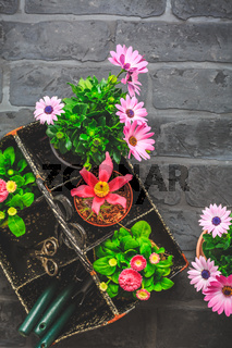 Tool box withpotted spring flowers