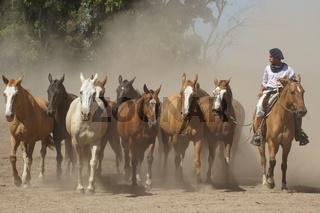 Argentinische Pferde, Gaucho, Pampa, Argentinien