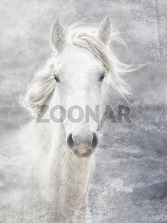 cheval de la Camargue