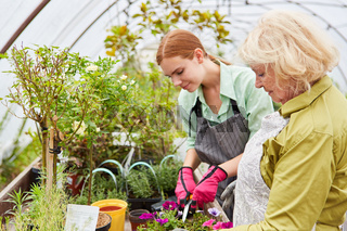 Junge Frau als Gärtner Azubi und ältere Floristin