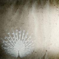 peacock bird old grunge paper texture
