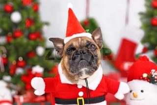 Französische Bulldogge in Wiehnachtsmannkostüm