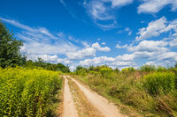 Dirty road through blooming wild grasses and coppices on village outskirts. Sunny, summer day with beautiful picturesque clouds.