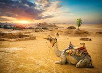 Sunset and Giza