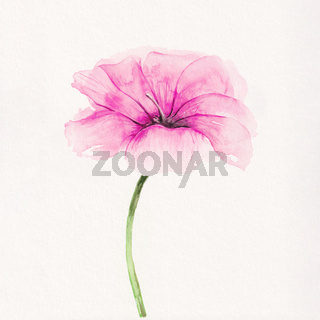 watercolor painting of a pink blossom flower