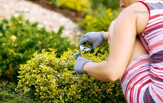 detail of woman hand gardening