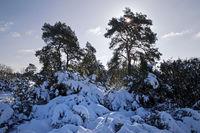 Westruper Heide nature reserve in winter, Haltern am See, Ruhr area, North Rhine-Westphalia, Germany