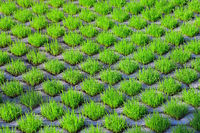 210610-221 Rasengittersteine Gras Rasen.jpg
