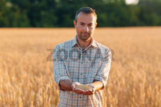 Farmer hands hold ripe wheat seeds after the harvest