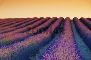 Lavendelfeld Sonnenuntergang - lavender field sunset 02