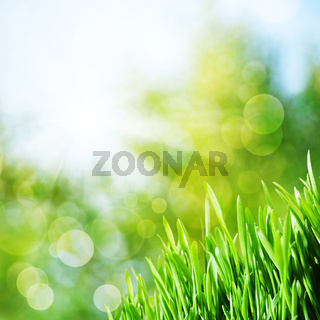 Abstract natural backgrounds with green grass and beauty bokeh