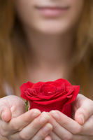 blurred portrait of woman is holding or giving red flower rose in her hands