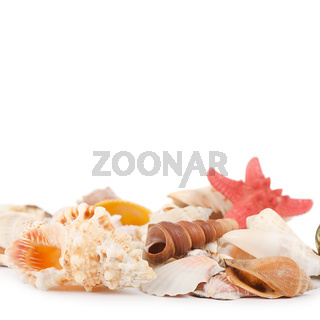 Sea shell  isolated on a white