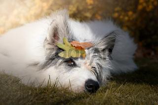 Hund liegt entspannt im Herbst in der Sonne