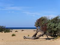 The beach and dunes of Piscinas