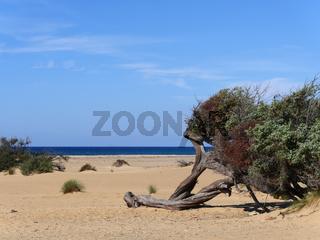 Strand und Dünen von  Piscinas an der Westküste von Sardinien