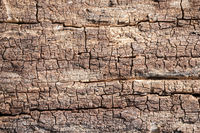 Rustic wooden background texture: Closeup of old tree, tree bark