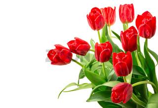 Rote Tulpen mit Raum für Text