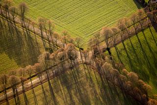 Wegekreuzung mit Baumallee im Herbst. Linen