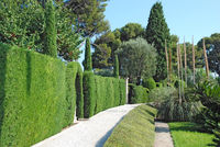 path through the beautiful garden