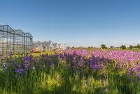 Greenhouses and flower meadow on Reichenau Island, Baden-Wuerttemberg, Germany