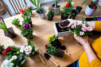 Female gardener is planting a flower in a pot