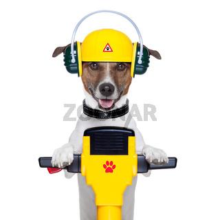 handyman dog worker