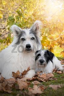 zwei Hunde, Freundschaft, Tierfreundschaft