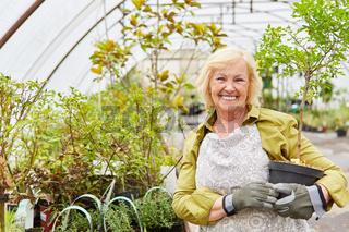 Gärtnerin mit Zierbaum im Gewächshaus der Gärtnerei