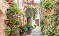 Flowers in ancient street located in Spello village. Umbria Region, Italy.