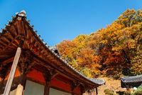 Autumn of Buseoksa Temple in Yeongju, Korea