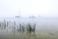 Misty summer morning at lake Ammersee, Bavaria, Germany