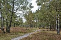 Lueneburg Heath near Schneverdingen