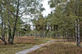 Lueneburger Heide Schneverdingen
