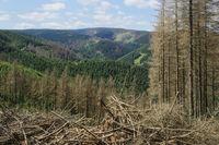 Harz - Totholzflächen, Waldschäden, Deutschland