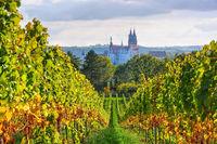 Blick über herbstliche Weinberge auf die Stadt Meissen in Sachsen, Deutschland - view over autumn vineyards to the city of Meissen in Saxony, Germany