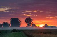 Foggy sunrise in the Donaumoos in Bavaria