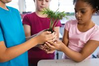 Mid section of diverse students holding a plant seedling together in the class at elementary school