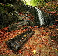 Rain Forest Waterfall in Autumn