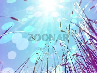 Nature and sunbeam