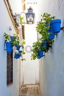 Alley in Cordoba with flower pots