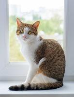 Kitty on a window. Beautiful cat sitting on windowsill and looking back
