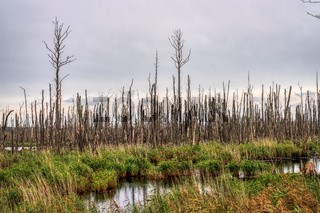The Peenetal near Anklam, Mecklenburg-Western Pomerania, Germany