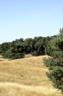 Heidelandschaft, Westruper Heide, Haltern am See, Deutschland